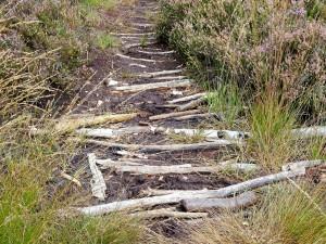 Provisorischer Bohlenweg im Hochmoor